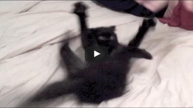 Kind Man Calms Crazy Black Kitty Down – See How!