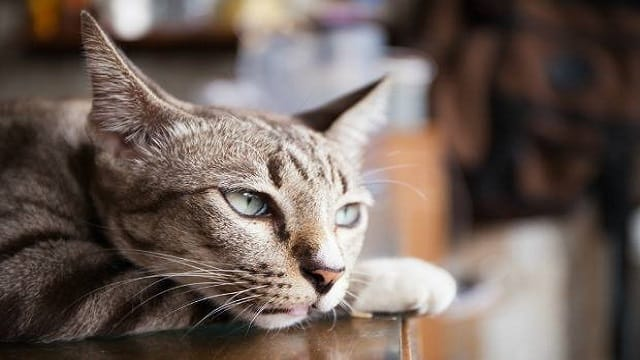 WATCH: 40% of Pet Cats Are 'Depressed'. Click to Find Out Why …