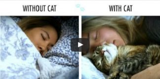 Without Cat vs. With Cat - NAILED IT!