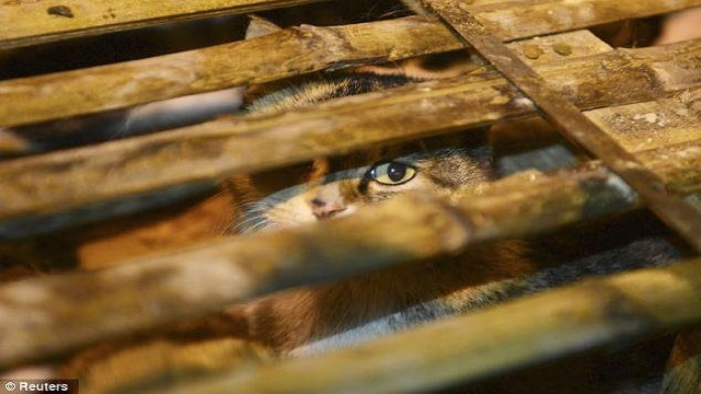 Cat Meat Trade Busted in Chennai, 16 Cats Rescued!