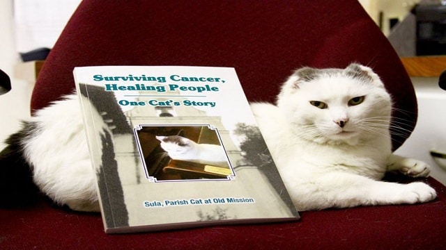 Mission Cat's Story is a Tale of Hope for People Fighting Cancer!