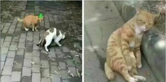 Husband Cat Found Wife Has Cheated