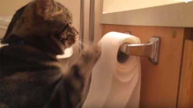 Cat Loves To Play With Toilet Paper – But Wait Until You See What He Does After He Unrolls It!