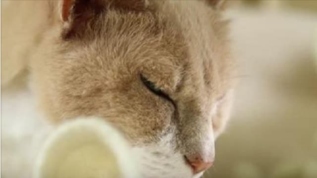 WATCH: Using a Cat to Help You Meditate!