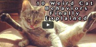 10 Very 'Weird' Cat Behaviors Explained!