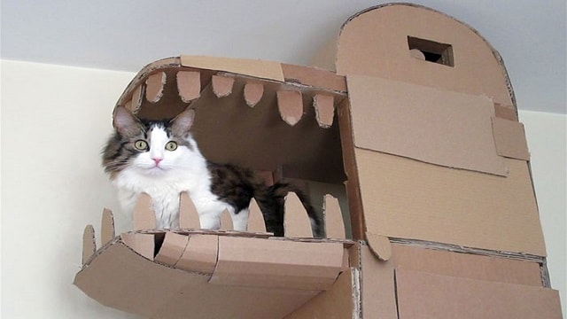 Man Builds A Dragon-Shaped Cardboard House For His Cat In Order To Please His Master!