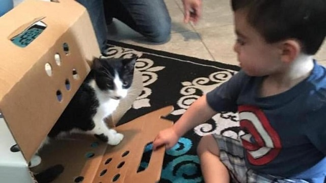 They Lost Their Cat – But Then They Did the Only Sensible Thing!