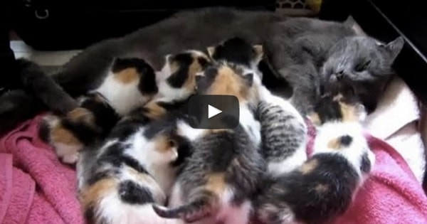 8-Month-Old Rescue Cat Nursing Her 8 Kittens - A 'Cute' Reminder to Everyone to Always ...