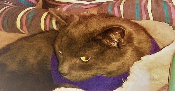 11-year-old Girl's Missing Cat, Presumed Dead, Returns to Prove 'Miracles' …