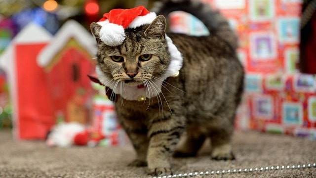 Nutmeg – the World's Oldest Cat – Gets Ready for Another 'Paw-fect' Christmas!