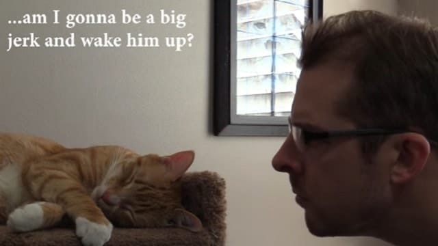 Cole and Marmalade's 'Cat Daddy', Chris, Replies to Man Who Took Revenge on His Kitty For Waking Him Up by Screaming!