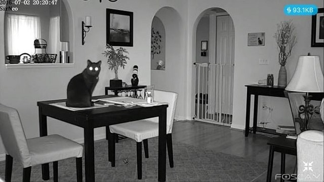 Man Logs into His Home Security Cam to Check on His Cat - But His Cat Is Onto Him!