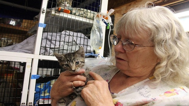 Cat Rescue Owner Does Something Amazing To Rescue Almost 20 Cats From Burning Building!