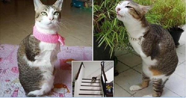 'Able' – the Cat Whose Legs Were 'Fried Off' by Electric Shock! Just Watch Him Go!