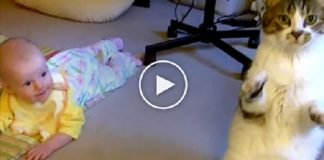 Watch The Cat's Reaction When Mom Puts Her Baby Down On The Carpet!