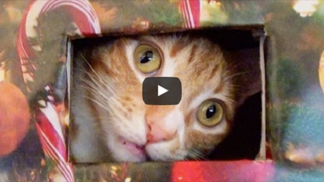 Cat Crashes Christmas Tree But Then – His Humans Set Up A Cat Proof Christmas Tree!