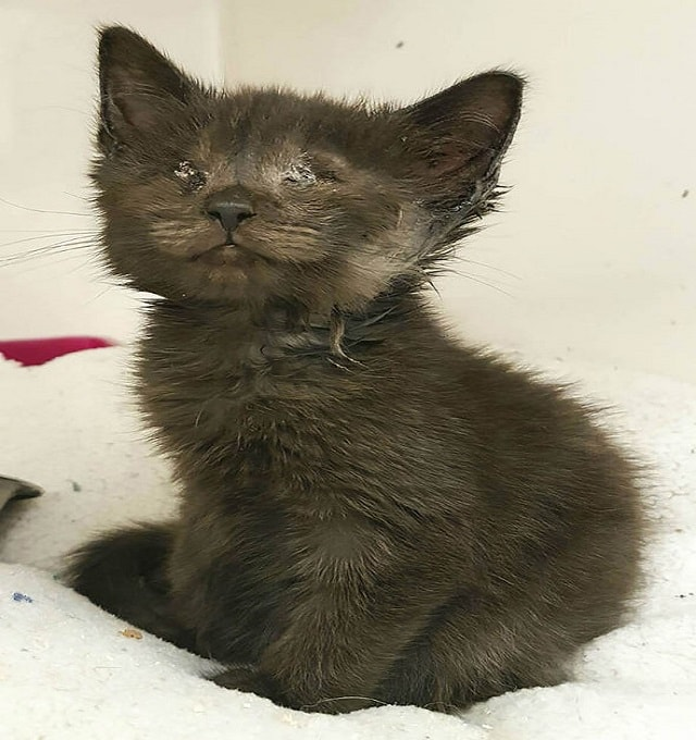 The adorable moggie was found lying on the street by a member of the public