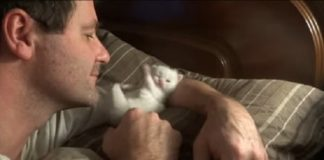 Tiny Kitten Loves His Human Dad Very Much!