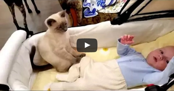 Kitten Greatly Helps Calm Baby Down!