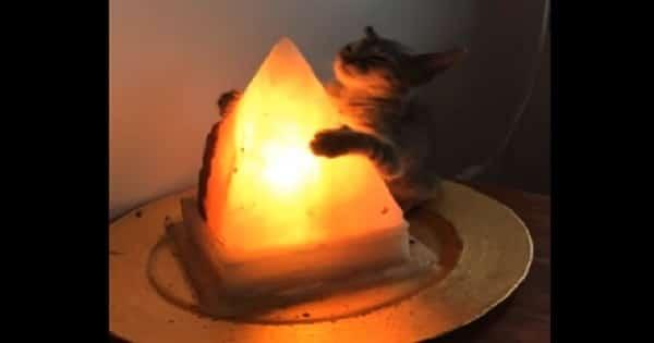Cat Blissfully Hugs His Very Favorite Lamp!