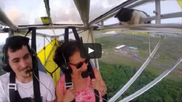 Pilot And Passenger Shocked When They Noticed a Cat On Plane's Wing After Take-off!