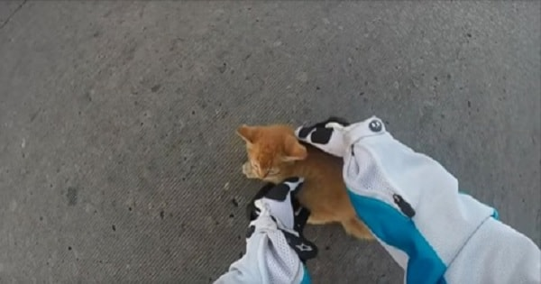 Biker Jumps Off Motorcycle to Save Kitten in Middle of Busy Oklahoma Intersection!