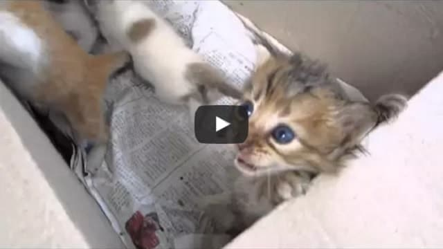 Abandoned Kittens Feel Love for the First Time!