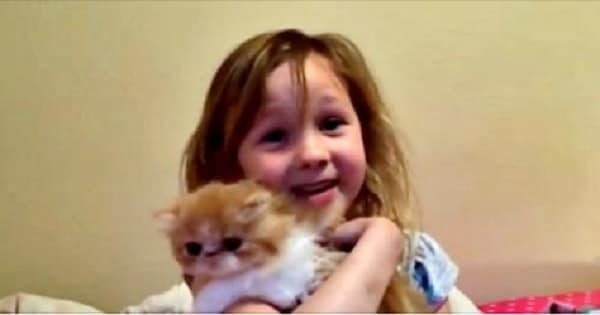 Girl Gets Kitten for Birthday and Her Reaction is Absolutely Priceless!