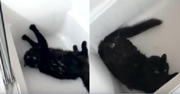 Adorable Black Cat's Version of The Little Drummer Boy!