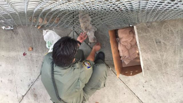 Animal Control Officer Rescues Stranded Cat In Terrible Predicament!