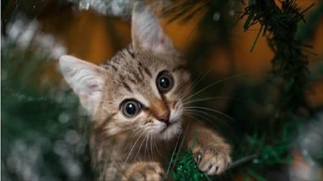 Holiday Plants, (And Other Things,) That Are Toxic to Dogs and Cats!