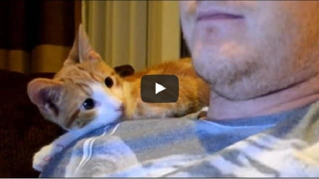 Guy Adopts Rescue Kitten, But After A Few Days, It's Just The Cutest Thing!