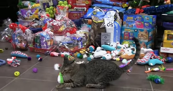 Watch As Shelter Dogs and Cats Go From Sad to Ecstatic After Receiving Surprise Christmas Toys!