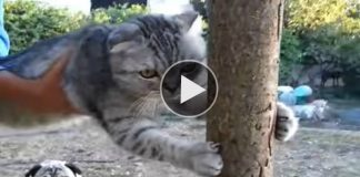 Watch Stubborn Cat Absolutely Refuse to Go Back Inside!