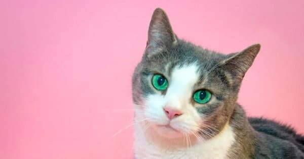 Cat Finds New Loving Home After 13 Years Of Being Confined …