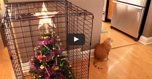The 10 Ways To Survive Christmas With Cats!
