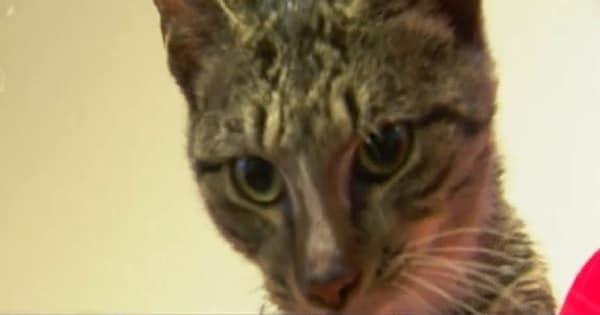 Florida Garbage Collectors Rescue Cat Dumped in Trash Bag!