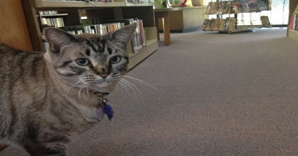 How Browser the Cat Literally Ruined a City Councilman's Political Career!