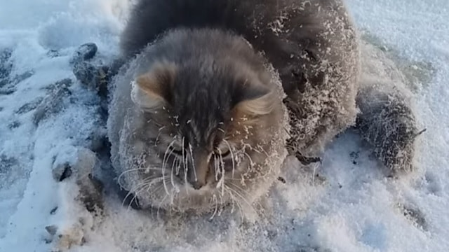 Caught on Camera: Cat's Paws Get Frozen to the Ground – Until …