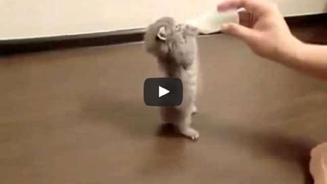 Small Kitten Drinking Milk From Bottle – More Adorable Than You Might Think!