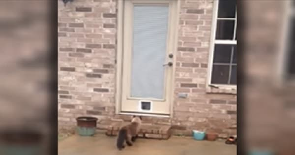 Man Builds A Pet Door For His Beloved Cat, But The Cat Wants Nothing To Do With It!