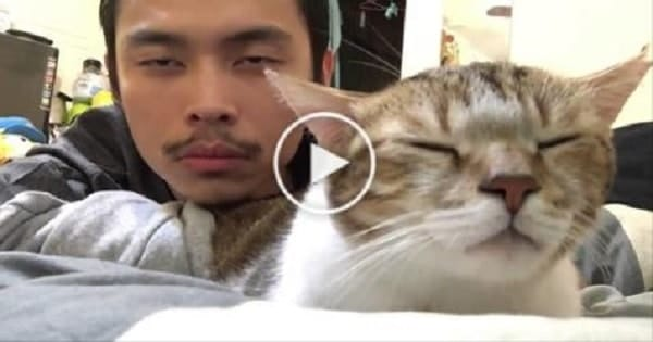 Cat And Her Human Bob Heads to the Rhythm Of A Song – Guaranteed to Make You Laugh!
