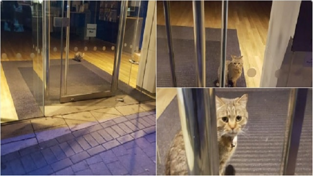 Feline 'Bank Robber' Found Trapped Overnight in British Bank!