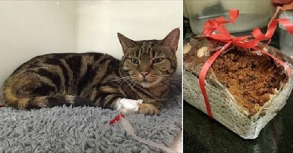 Move Over, Mistletoe! Cat Breaks Into Gift Basket and Discovers New Kind of Holiday Trouble for Cats!