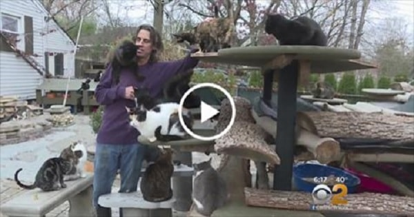 Man Who Lives With 300 Rescued Cats Has Transformed His House Into Loving Sanctuary!