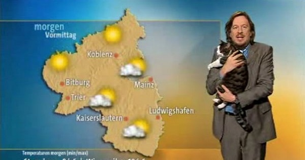 Cat Interrupts German Weather Report and Demands Cuddles!