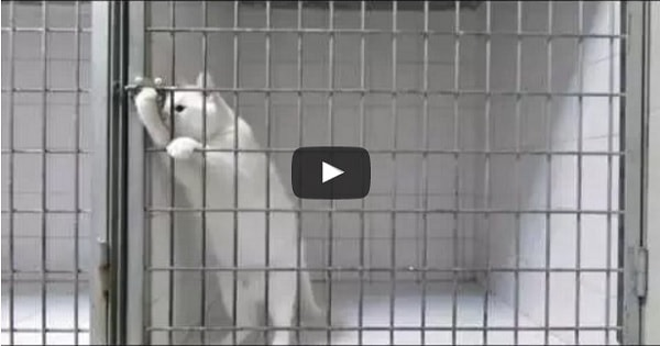 This Shelter Cat Has Had Just About – ENOUGH!