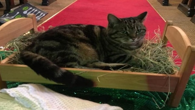 Church Cat Evicts Baby Jesus from His Manger – And the Internet Loses It!