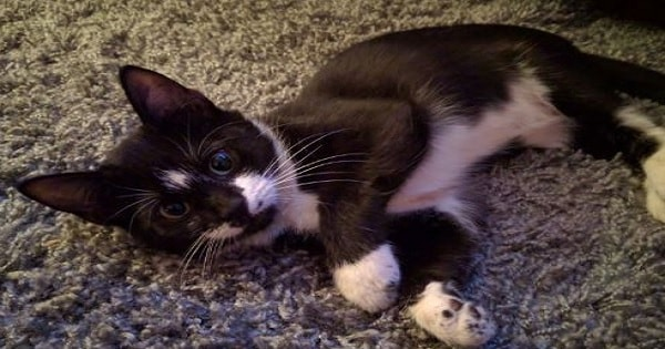 Kitten Found Alone and Crying in the Woods Transforms into a Total Love Bug in …