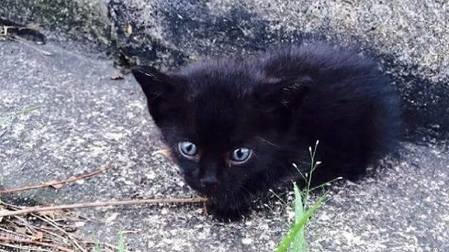 Family Rescues Tiny Black Orphaned Kitten – He Eats – and Then He Starts Singing!